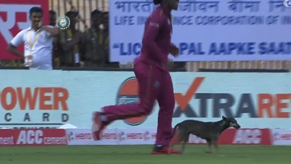 India vs West Indies: Play Stops After Dog Inside The Ground, WATCH